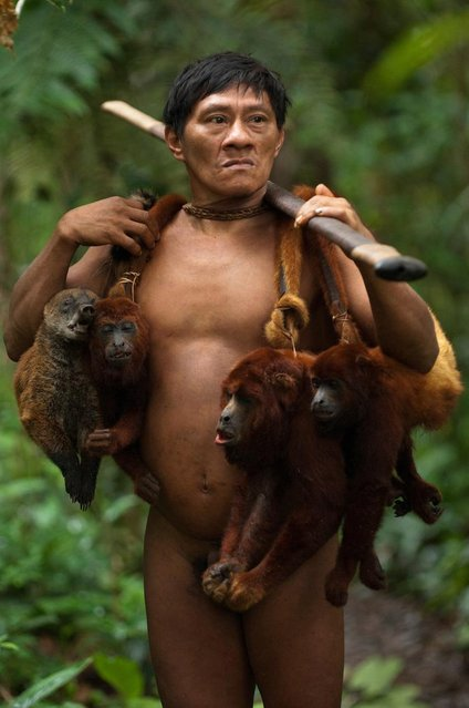 The Huaorani people in the Ecuadorian rainforest hunt monkeys by climbing trees and shooting them with blowpipes. (Photo by Pete Oxford/Mediadrumworld.com)