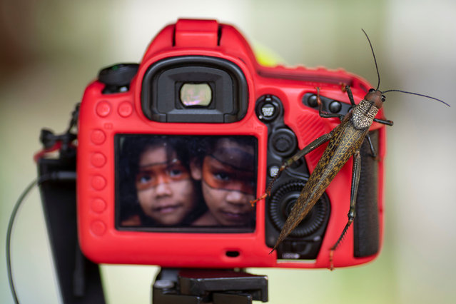 A grasshopper rests on a photographic camera during a meeting in the village of Alto Jamari called to face the threat of armed land grabbers invading the Uru-eu-wau-wau Indigenous Reservation near Campo Novo de Rondonia, Brazil on January 30, 2019. (Photo by Ueslei Marcelino/Reuters)
