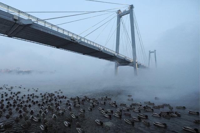 A view of Vinogradovsky Bridge, a cable-stayed footbridge over the Yenisei River, linking the Strelka District and Tatyshev Island in Krasnoyarsk, Russia on December 3, 2018. (Photo by Kirill Kukhmar/TASS)