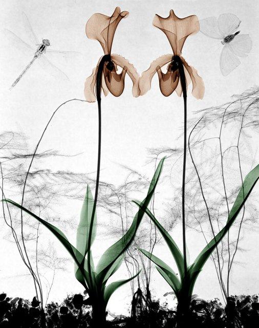 """Orchids"". (Photo by Arie van't Riet)"
