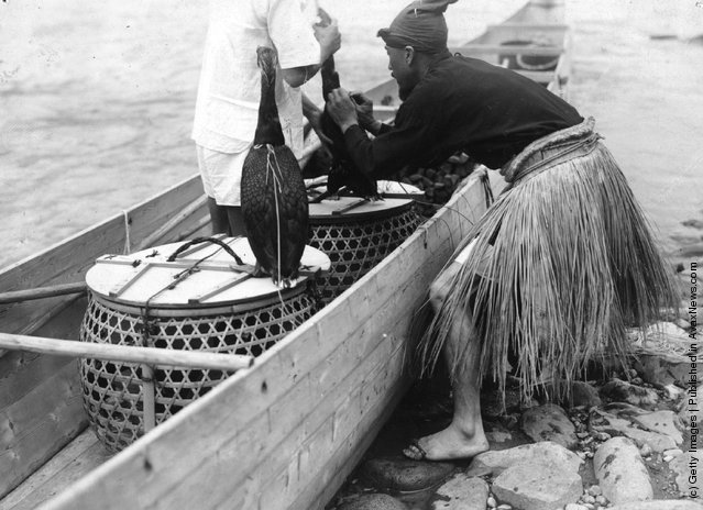 Cormorant Fishing