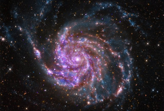 The spiral galaxy M101 is pictured in this undated handout photo from NASA's Chandra X-Ray Observatory. M101 is a spiral galaxy like our Milky Way, but about 70 percent bigger. It is located about 21 million light years from Earth. (Photo by Reuters/NASA)
