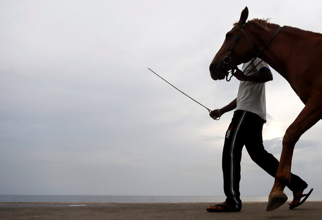 A man walks his pony along a road while looking for customers for rides in Colombo, Sri Lanka February 28, 2017. (Photo by Dinuka Liyanawatte/Reuters)