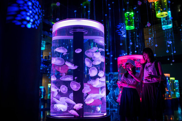 People look at the Jellyfish display at the EPSON Aqua Park Shinagawa on July 15, 2015 in Tokyo, Japan. The EPSON Aqua Park Shinagawa, previously known as EPSON Shinagawa Aqua Stadium, reopened to the public on July 10, 2015 after an extensive renovation. The animal and fish displays have been enhanced with high-tech neon lights, touch screens and audiovisual shows. (Photo by Chris McGrath/Getty Images)