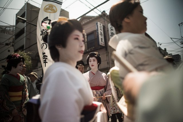 In this picture taken on May 19, 2017, geishas parade during the Sanja Matsuri festival in Tokyo. Over 1.5 million people flocked to Tokyo's Asakusa district during the three-day annual festival, which heralds the coming of summer in the Japanese capital. (Photo by Fred Dufour/AFP Photo)