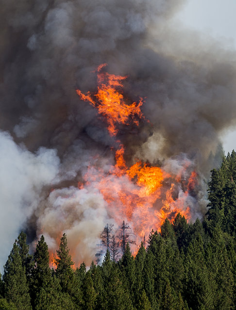 The King Fire burns near Fresh Pond, California September 16, 2014. More than 1,000 firefighters were battling the 8,600-acre blaze in dense forest and steep terrain in El Dorado County. (Photo by Noah Berger/Reuters)