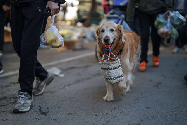 A dog carries a basket at a market in Shenyang in China's northeastern Liaoning province on May 12, 2020. China's consumer inflation fell again in April on-year, official data showed on May 12, coming off eight-year highs in recent months as the country gradually resumed regular life and production after coronavirus lockdowns. (Photo by AFP Photo/China Stringer Network)