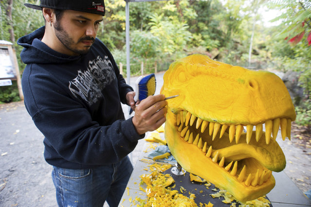 In this image released on Friday, September 26, 2014, Chris Vierra, renowned pumpkin carver from Villafane Studios, creates a lifelike Tyrannosaurus Rex sculpture using pumpkins and squash at Field Station: Dinosaurs, a 20-acre outdoor Jurassic learning expedition and family tourist attraction in Secaucus, N.J. (Photo by Charles Sykes/AP photo/Invision for Field Station: Dinosaurs)