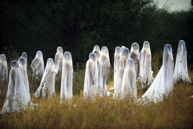 Naked volunteers perform for U.S. photographer and artist Spencer Tunick (out of frame) at Los Senderos Villages in San Miguel de Allende municipality, Guanajuato State, Mexico on November 4, 2012. Tunick is in Mexico for one day to make this performance commemorating the Day of the Dead. (Photo by Alfredo Estrella/AFP)