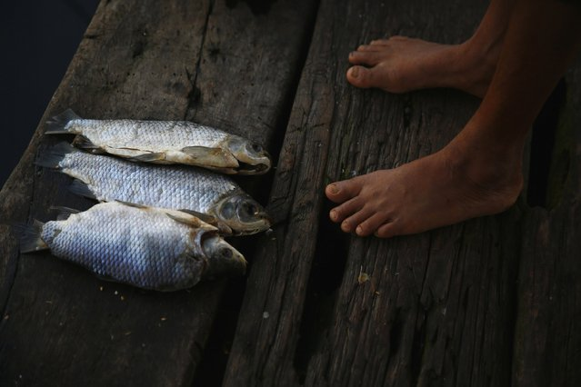 A woman stands next to fish which were left on the dock of her stilt house in the village of Ologa in the western state of Zulia October 23, 2014. (Photo by Jorge Silva/Reuters)