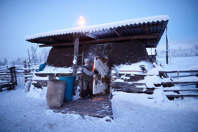 Cows in the village are housed through the winter in thickly insulated sheds like this. (Photo by Amos Chapple/Courtesy Images/RFE/RL)