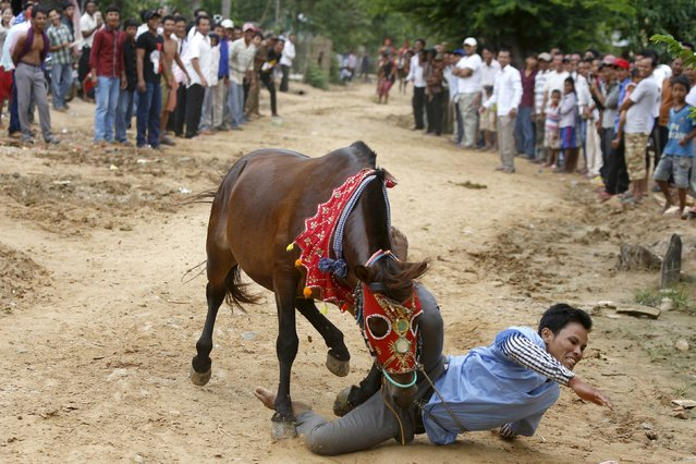 A man falls from a horse during a religious ceremony at the Pchum Ben festival, in Vihear Sour village in Kandal province, Cambodia October 12, 2015. (Photo by Samrang Pring/Reuters)