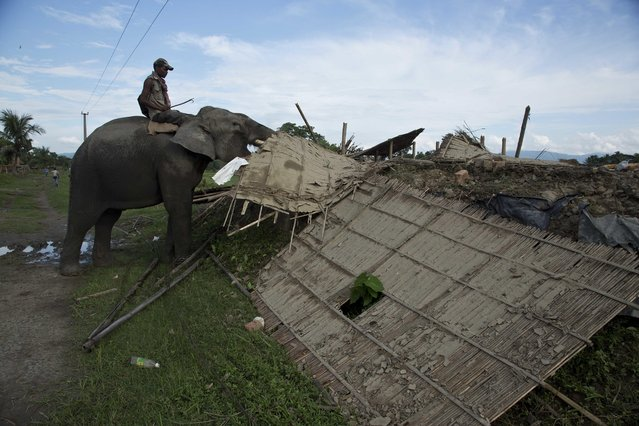 A mahout guides a forest department elephant to demolish a house at Bandardubi village, on the periphery of the Kaziranga National Park, northeastern Assam state, India, Monday, September 19, 2016. (Photo by Anupam Nath/AP Photo)