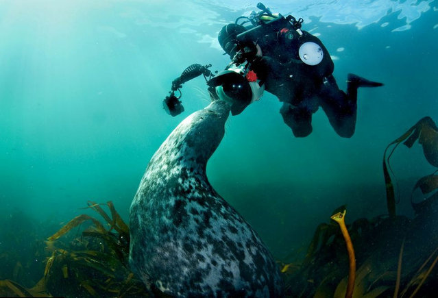 Seal By Adam Hanlon