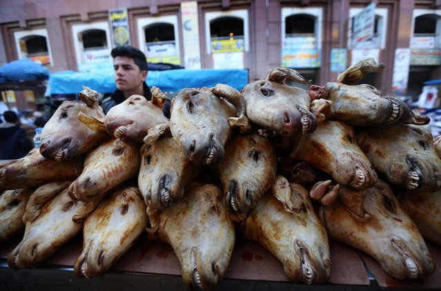 An Iraqi Kurdish street vendor sells cooked goat heads in a market in Arbil, the capital of the autonomous Kurdish region of northern Iraq, on February 16, 2016. (Photo by Safin Hamed/AFP Photo)