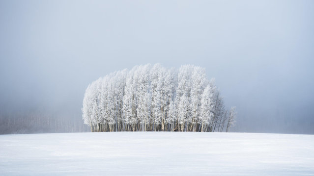 """""""Trees & Fog"""". Frosted trees in front of a bank of fog, in a bitterly cold landscape near Broomfield, Colorado. (Photo by Preston Stoll/Royal Meteorological Society's Weather Photographer of the Year Awards)"""