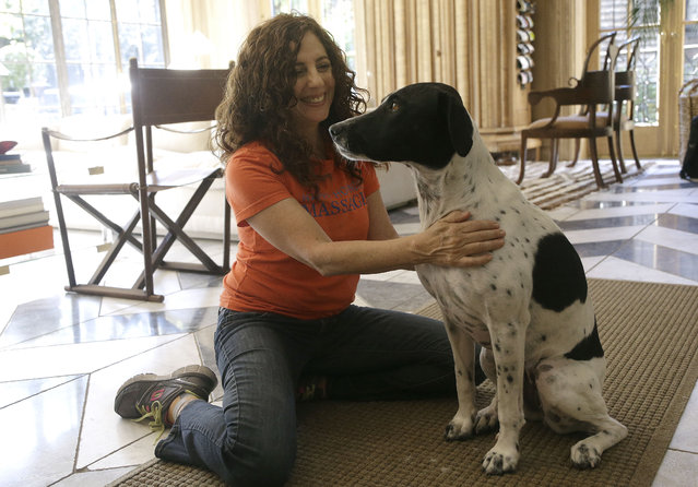 In this November 6, 2014 photo, Shelah Barr of Happy Hounds Massage smiles while giving a massage to Dewie, 2, at the home of Laurie Ubben in San Francisco. (Photo by Jeff Chiu/AP Photo)