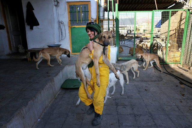 "In this Friday, December 5, 2014 photo, Afsaneh Zarrin who runs the Vafa Animal Shelte, carries an ill dog, in the city of Hashtgerd 43 miles (73 kilometers) west of the capital Tehran, Iran. ""We want to show people that those homeless dogs that they see in streets and alleyways can be our best friends"", said  Zarrin, who is in charge of adoptions. (Photo by Vahid Salemi/AP Photo)"
