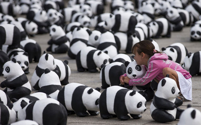 A child sits between 1,600 panda figures from papier mache in front of the main station in Berlin, Germany, Monday, August 5, 2013. The World Wide Fund for Nature (WWF) has put 1,600 panda bears in front of the train station for two days to symbolize how few of the animals are still alive in the wild. It is the start of a tour of 25 German cities to celebrate the 50th anniversary of the WWF. (Photo by Thomas Peter/Reuters)