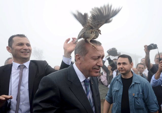 Turkish President Tayyip Erdogan, accused by critics of an increasingly authoritarian style of government, has argued that the country would be better served by a strong presidential system. Turkey faces conflict on several fronts, battling Islamic State militants, Kurdish rebel fighters and militant leftists. Over two million refugees from Syria are encamped on its borders. Pictured in Rize, Turkey, August 14, 2015. (Photo by Reuters/Stringer)