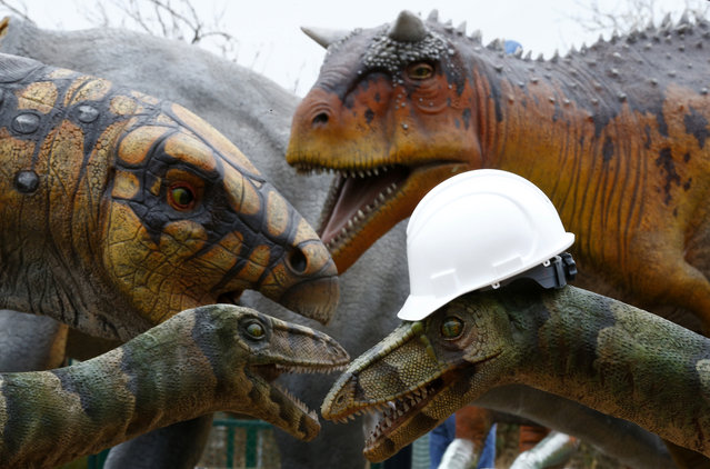 A construction worker's hat sits on the head of a Coelophysis dinosaur at Twycross Zoo near Atherstone, central England, March 1, 2013. (Photo by Darren Staples/Reuters)