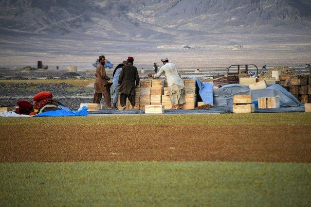 Afghan farmers work at a grape farm to make raisins in Kandahar on September 6, 2021. (Photo by Javed Tanveer/AFP Photo)