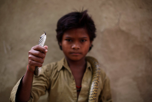 Marshal Nath poses for a photograph with a snake in Jogi Dera (snake charmers settlement), in the village of Baghpur, in the central state of Uttar Pradesh, India November 10, 2016. (Photo by Adnan Abidi/Reuters)