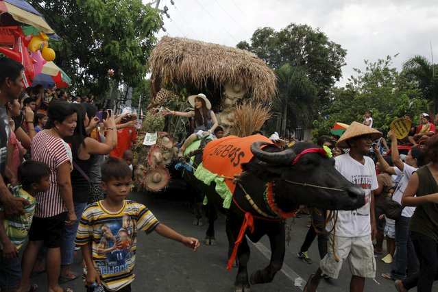 Farmers decorate their carabao (water buffalo) as they take part in a parade during the annual Carabao Festival in Pulilan, Bulacan in northern Philippines May 14, 2015. Water buffalos, locally known as carabaos, are led during a parade in the streets of the town to honour its patron saint San isidro Labrador, and carabaos will kneel in front of the church to give thanks for a year-long bountiful harvest. (Photo by Gina Minguito/Reuters)