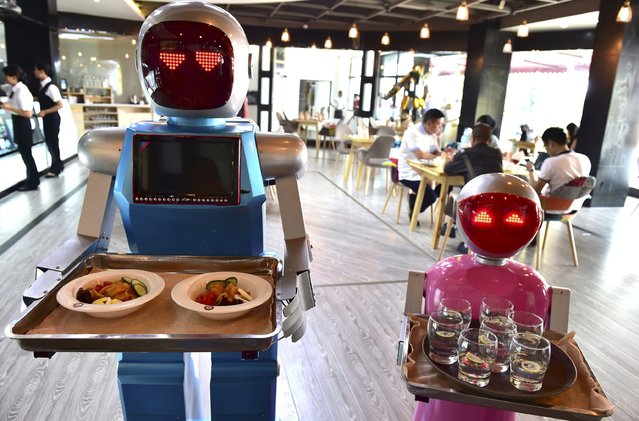 Robot couple Xiaolan (L) and Xiaotao carry trays of food at a restaurant in Jinhua, Zhejiang province, China, May 18, 2015. (Photo by Reuters/Stringer)