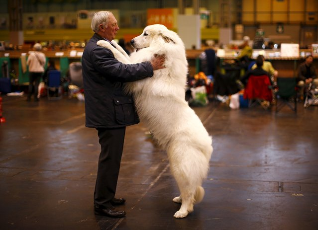 Arthur Ward stands with his Pyrenean Mountain Dog Cody during the first day of the Crufts Dog Show in Birmingham, central England, in this March 5, 2015 file photo. (Photo by Darren Staples/Reuters)