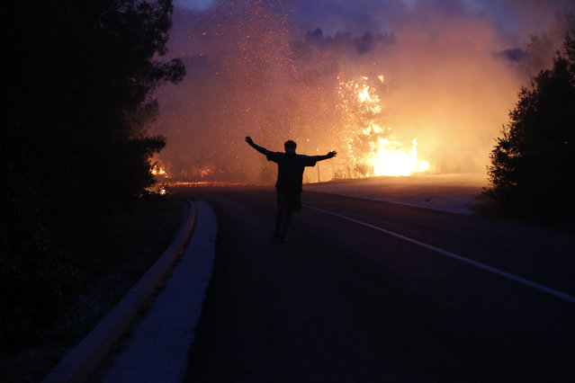 A Croatian fire worker attends to a large forest fire in the village of Ponikve on the Peljesec peninsula in southern part of Croatia, Thursday July 23, 2015. Volunteers, military and Croatian fire fighters are struggling to cope with raging forest fires on its Adriatic coast. The biggest blaze has forced hundreds of residents and tourists to evacuate, at the height of the tourist season. (Photo by Amel Emric/AP Photo)