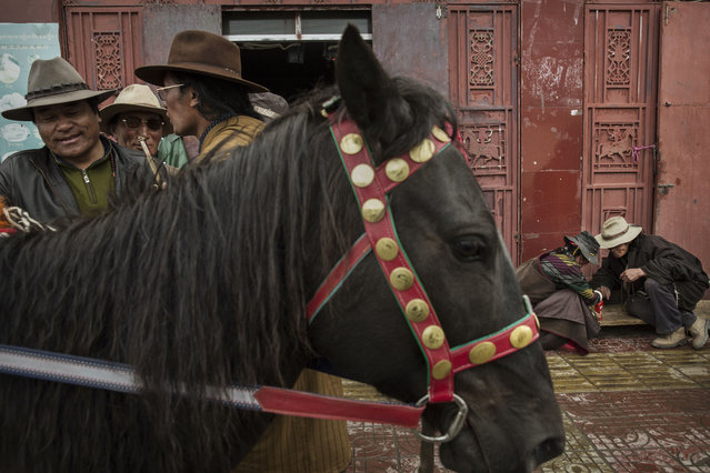 Tibetan nomads, right, check cordycep fungus as another tries to sell his horse on the 15th day of Saka Dawa, the holiest day of the Buddhist calendar on May 21, 2016 in Sershul on the Tibetan Plateau in the Garze Tibetan Autonomous Prefecture of Sichuan province. (Photo by Kevin Frayer/Getty Images)