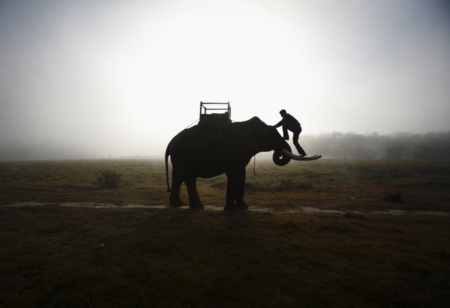 A mahout climbs his elephant as he heads towards the Chitwan National Park at Sauraha in Chitwan, about 170 km (106 miles) south of Kathmandu, December 28, 2012. (Photo by Navesh Chitrakar/Reuters)