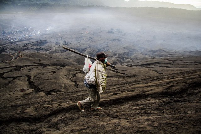 """An Indonesian Tenggerese Hindu worshipper carries offerings as he walks across Mount Bromo's """"Sea of Sand"""" during the Yadnya Kasada Festival at crater of Mount Bromo in Probolinggo, East Java, Indonesia, 21 July 2016. (Photo by Fully Handoko/EPA)"""