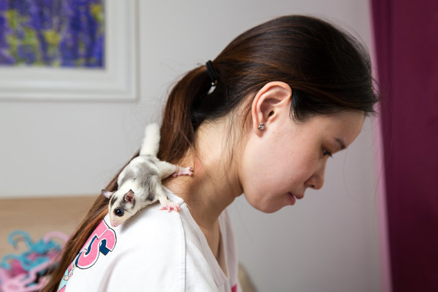 "Mao Yueying, 27, with her pet ""sugar glider"" at home in Beijing. The nocturnal gliding possum (Petaurus breviceps) is typically found in the forests of Australia, Indonesia and New Guinea but has become a popular pet in China due to its small size and unique appearance. She keeps three sugar gliders at home with the most expensive white glider costing 4,000 RMB (about $600). (Photo by Sean Gallagher/The Guardian)"