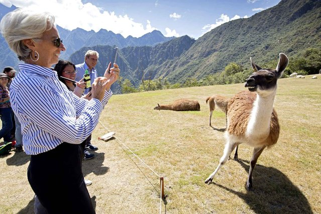 International Monetary Fund managing director Christine Lagarde takes a picture of a llama in Machu Picchu, Peru on October 5, 2015. Lagarde is in Peru to attend the 2015 IMF/World Bank Annual Meetings. (Photo by Stephen Jaffe/AFP Photo/IMF)