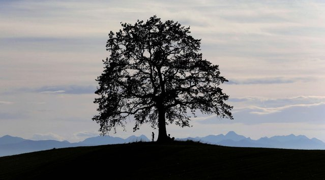A man rest under a tree in front of the Alps during warm and sunny autumn weather near Muensing south of Munich, Germany, Saturday, October 12, 2014. (Photo by Matthias Schrader/AP Photo)