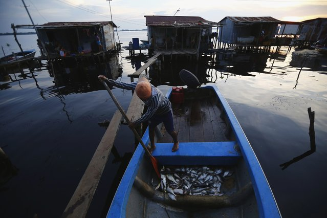 A fisherman looks at his catch in the stilt village of Ologa in the western state of Zulia October 22, 2014. (Photo by Jorge Silva/Reuters)