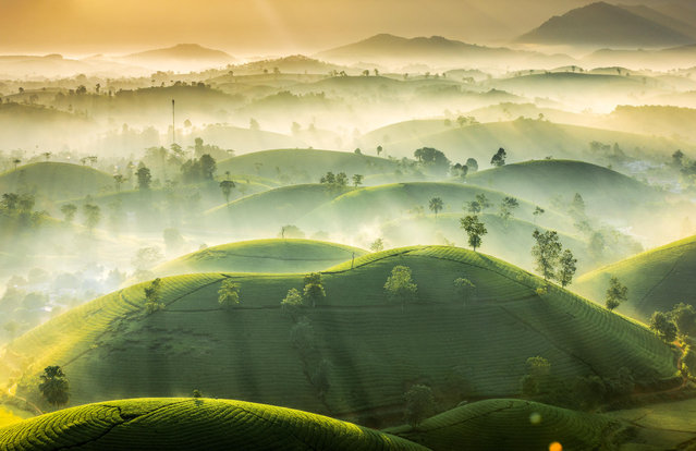 """Tea Hills"". Early-morning mist over the tea hills of Phu Tho province in Vietnam. (Photo by Vu Trung Huan/Royal Meteorological Society's Weather Photographer of the Year Awards)"