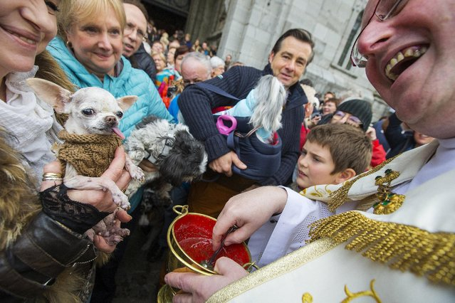 Belgian priest Philippe Goosse (R) blesses a Chihuahua held by its owner during a religious and blessing ceremony for animals, outside the Basilica of St Peter and Paul in Saint-Hubert, Belgium November 3, 2015.  Hundreds of animals get blessed during the celebration of Saint Hubert,  the patron saint of hunters who is also invoked for protection of dogs and horses, organisers said. (Photo by Yves Herman/Reuters)