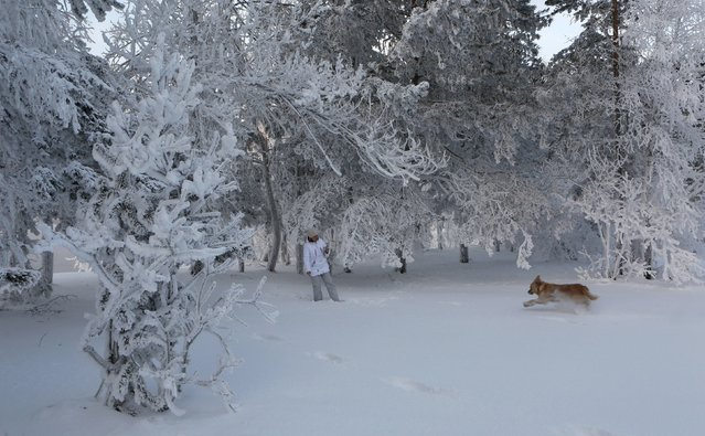 A woman plays with a dog in a snowy wood on the bank of the Yenisei river, with the air temperature at about minus 21 degrees Celsius (minus 5.8 degrees Fahrenheit), outside the Siberian city of Krasnoyarsk, Russia, January 10, 2016. (Photo by Ilya Naymushin/Reuters)