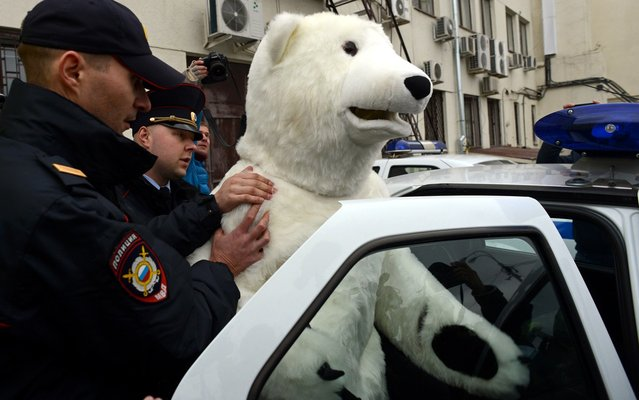 """Police officers escort an anti-Greenpeace activist dressed as a Polar bear  who was detained while confronting Greenpeace activists during their rally in support of the """"Arctic 30"""" detained Greenpeace activists in Moscow,  on October 18, 2013. The the """"Arctic 30""""  are now in custody in Russian northern Murmansk region charged with on piracy charges for almost three weeks after their ship Arctic Sunrise was seized by Russian security forces after a protest at a Russian oil rig. (Photo by Kirill Kudryavtsev/AFP Photo)"""