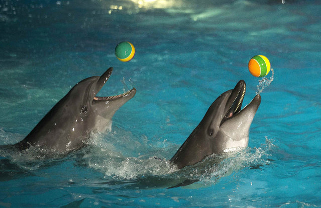 Dolphins perform in a zoo during a show celebrating International Women's Day in Minsk March 8, 2015. REUTERS/Vasily Fedosenko (BELARUS - Tags: SOCIETY ANIMALS)