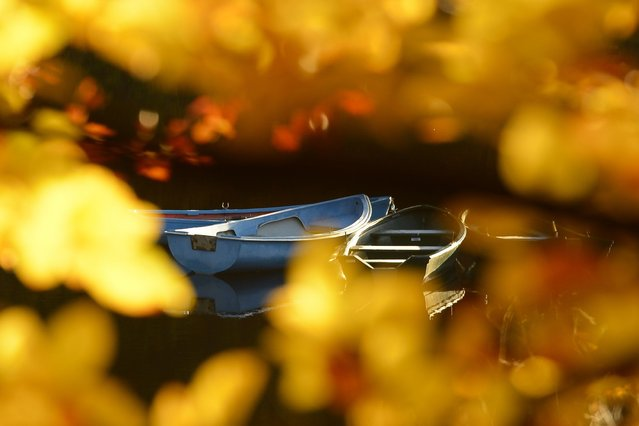 Boats are seen through Autumn leaves on Loch Faskally. (Photo by Russell Cheyne)