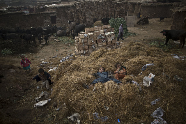 Afghan refugee children lie on a pile of straw gathered for the livestock, while playing in a poor neighborhood on the outskirts of Islamabad, Pakistan, Thursday, Dec. 5, 2013. Pakistan hosts over 1.6 million registered Afghans, the largest and most protracted refugee population in the world, according to the U.N. refugee agency, thousands of them still live without electricity, running water and other basic services. (Photo by Muhammed Muheisen/AP Photo)
