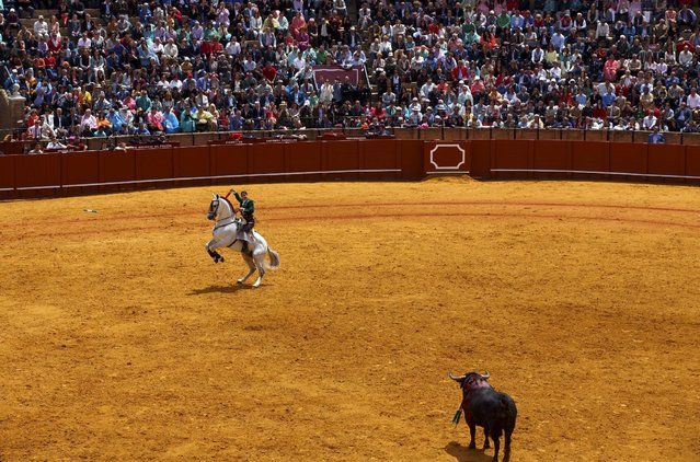 French rejoneadora (mounted bullfighter) Lea Vicens performs during a bullfight at The Maestranza bullring in the Andalusian capital of Seville, southern Spain April 26, 2015. (Photo by Marcelo del Pozo/Reuters)