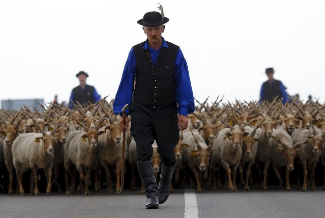A traditional Hungarian shepherd leads his Racka sheep during celebrations of the start of the new grazing season on the Great Hungarian Plain in Hortobagy, Hungary, April 23, 2016. (Photo by Laszlo Balogh/Reuters)
