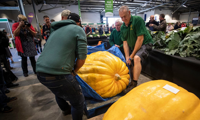 A giant pumpkin is weighed as judging takes place during the Giant Vegetable competition at the Harrogate Autumn Flower Show in Yorkshire, England on September 13, 2019. (Photo by Danny Lawson/PA Images via Getty Images)