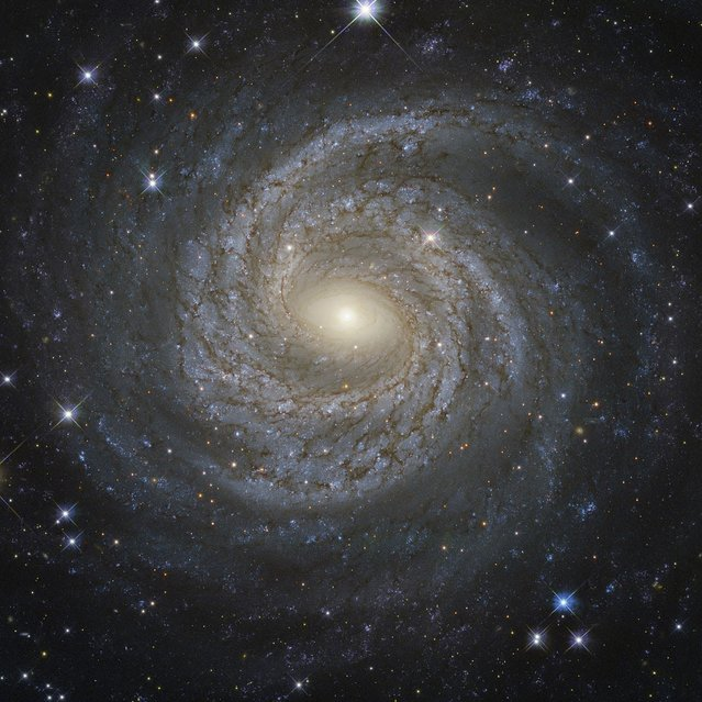 A NASA/ESA Hubble Space Telescope image shows a spiral galaxy NGC 6814, whose luminous nucleus and spectacular sweeping arms, rippled with an intricate pattern of dark dust, is a highly variable source of X-ray radiation, causing scientists to suspect that it hosts a supermassive black hole with a mass about 18 million times that of the Sun. (Photo by Reuters/NASA)