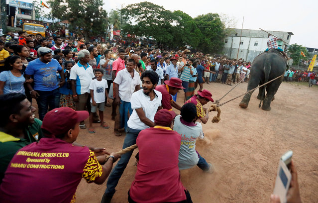 Men participate in a tug-of-war challenge with an elephant during the traditional festival games to celebrate the Sinhala, Hindu and Tamil New Year in Colombo, Sri Lanka April 23, 2017. (Photo by Dinuka Liyanawatte/Reuters)